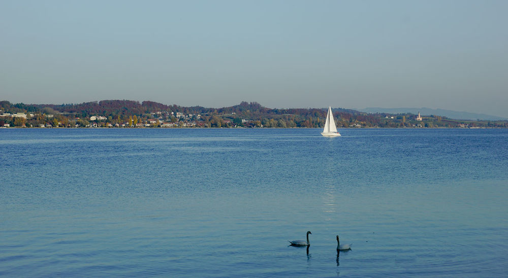 Bodman Lake Constance Lake View Nature Recreation  Sailing Sipplingen Sky Sky And Clouds Swan Water Überlingen Sea Outdoors Bird Animal Themes Nautical Vessel Clear Sky Scenics Sailboat Beauty In Nature Day Animals In The Wild No People