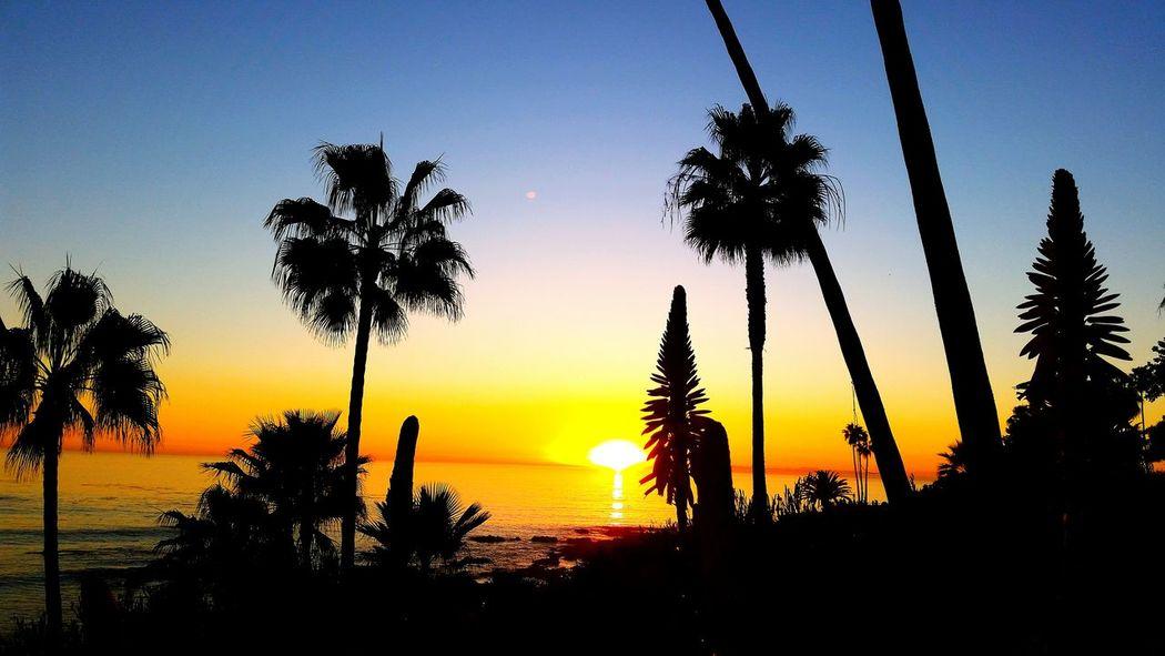 Beautiful Day Sunets Amazing Colors Sunsetporn Laguna Sunset Palm Trees Silouhette Sunset_collection Silouette & Sky Painted Sky