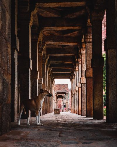 A dog Dogs Of EyeEm Mammal Architecture Animal Domestic Animals Built Structure Animal Themes Domestic Architectural Column Colonnade