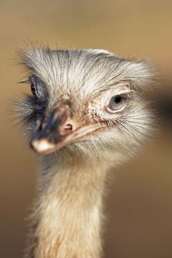 Bird One Animal Close-up Vertebrate Ostrich Eye Animal Eye