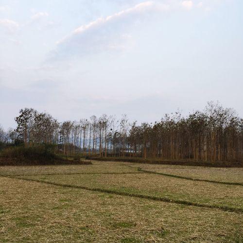 Fields Open Space Nature Cloudsky Peaceful