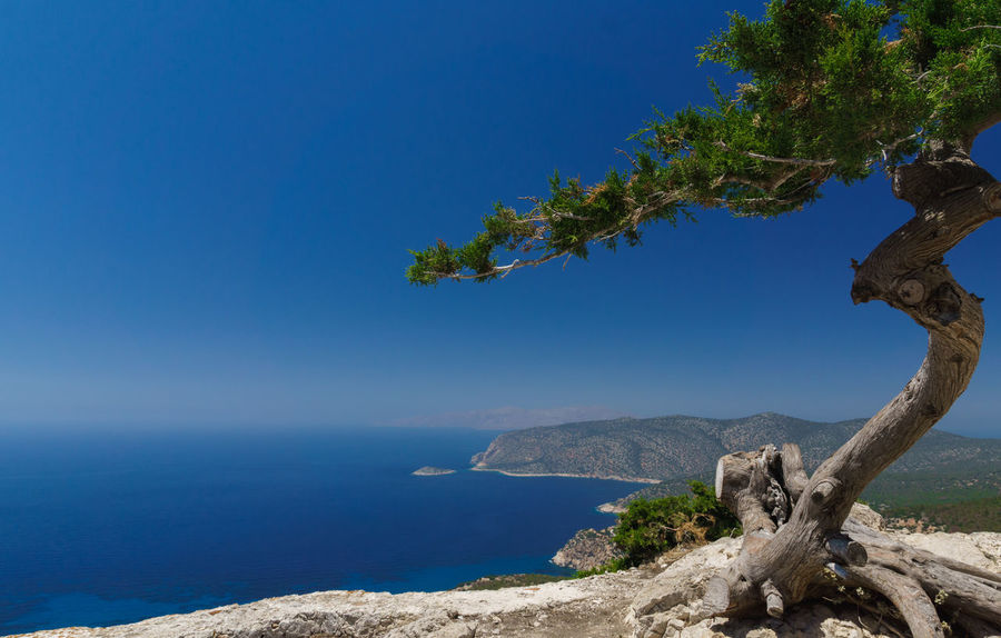 Beauty In Nature Blue Branch Clear Sky Close-up Day Dead Tree Growth Horizon Over Water Monolithos Nature No People Outdoors Rhodes Scenics Sea Sky Tranquil Scene Tranquility Travel Destinations Tree Tree Trunk Water