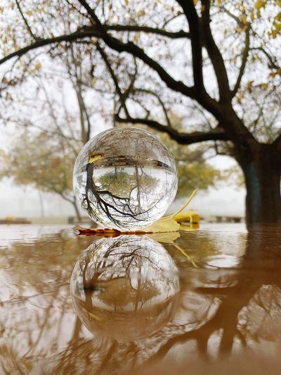 Autumn, foggy, rainy....All happening together🍁🍂🌂🌧🌧 Lensball Lake Elizabeth Fremont Foggy Morning Foggy Reflection