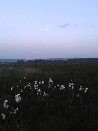 Lunar Moonlightscape Cottongrass Haunted Calderdale Moor  EyeEmbestshots Walking Around Moonlight Photography Fieldscape Check This Out Eyeemphotography Phonephotography EyeEm Best Shots Peaceful Place EyeEm Gallery Nor Land Eyeemphotography Hauntingly Beautiful