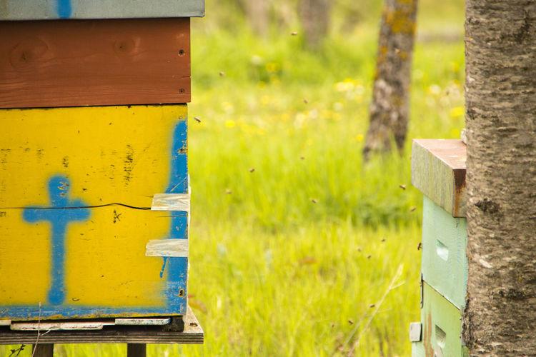 Bee stock Bee