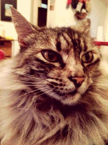 Gatito mirando al sudeste Domestic Cat Pets Feline Whisker One Animal