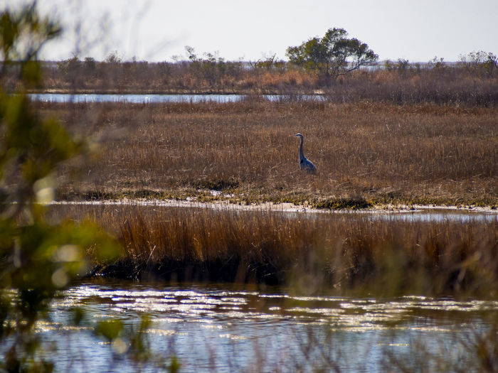 High angle view of gray heron perching on lake against sky