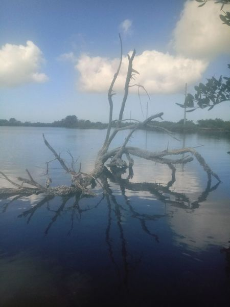 Exploring Beutiful  Lovemylife Saltlife Driftwood Barnacles Reflection Florida Summertime Florida Fishing Travel Water Reflection Cloud - Sky Tranquility Sea Silhouette Sky Outdoors No People Landscape Day Blue Beauty In Nature Scenics Tree Dawn Nature Beauty Horizon Over Water EyeEmNewHere Go Higher