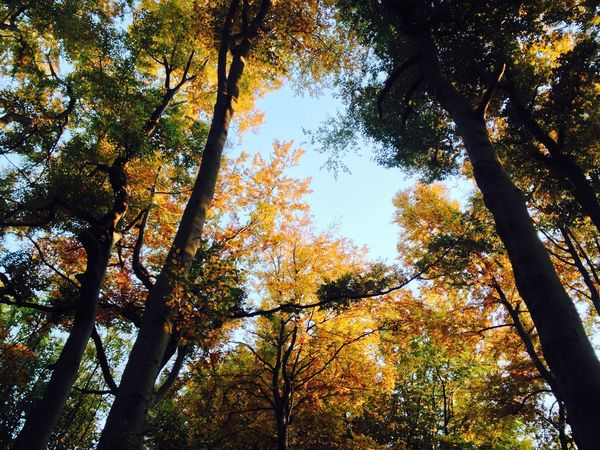 Beauty In Nature Branch Colorful Forest Forest Photography Green Color Growth Low Angle View Nature Outdoors Sky Solitude Tree Tree Canopy  Tree Love Tree Tops And The Sky Tree Trunk WoodLand