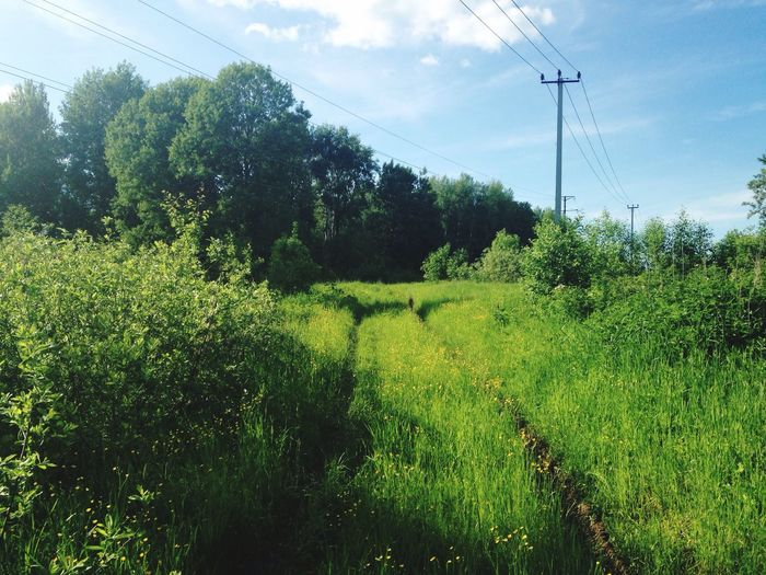 Tree Green Color Power Line  Cable Sky Nature Field Russia