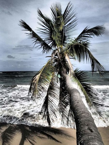 Things I Like Popular Photo EyeEm Best Shots Popular Photos Check This Out! EyeEm Gallery Eye4photography  Popular Check This Out Featured Photo Beach Life Is A Beach Palm Trees Welcomeweekly