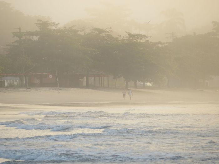 Perequê Açu Beach Beauty In Nature Cold Temperature Day Fog Nature No People Outdoors Scenics Sea Sky Tree Ubatuba Water Winter