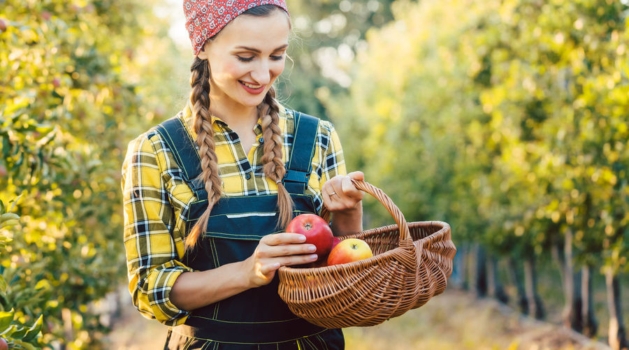 Beautiful farmer woman holding a basket with apples she just harvested from an orchard Agriculture Apple Farm Farmer Woman Agriculture Apple Harvest Apple Tree Basket Farmer Market Food Fruit Fruit Basket Harvest Holding Nature Orchard Organic Rural Scene Smiling Standing