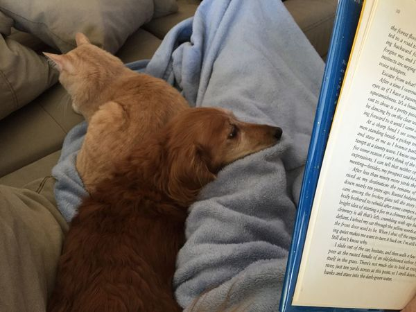 Snow Day ❄ Snuggles Reading
