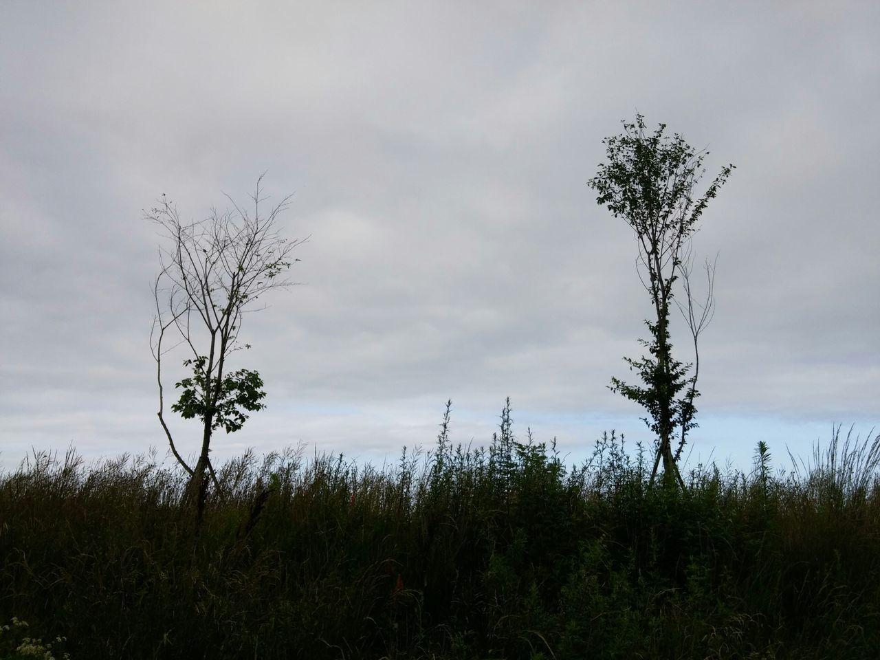 Trees Growing Against Sky