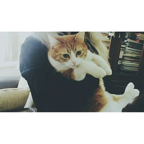 First Eyeem Photo EyeEmBestPics Eyemygallery Instagram Cat Cat♡ Catlovers Catsagram Venus