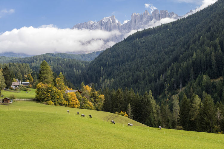 2017 275/365 Alto Adige Autumn Autumn Colors Dolomites Nova Levante Trentino Alto Adige Welschnofen Alps Beauty In Nature Bolzano Cloud - Sky Clouds Cows Day Grass Green Color Group Of Animals Growth Italy Landscape Latemar Mountain Mountain Range Nature No People October 2 One Year Project Outdoors Scenics Sky South Tyrol Tranquil Scene Tranquility Tree