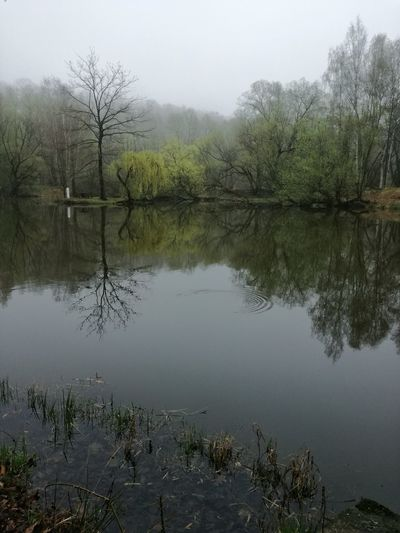 Reflection Lake Tree Water Nature Alligator Reptile Animals In The Wild Outdoors No People Day Beauty In Nature Animal Themes Bird Sky Fog Over Water Fog In The Trees Foggy Day Fog_collection Foggy Landscape Foggy Weather Nature Fog Landscape Foggy