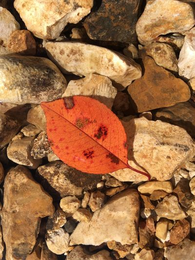 Leaf Nature Close-up Red No People Outdoors Textured  Backgrounds Fragility Day