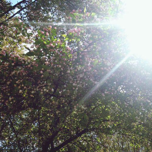 Spring ... Crazy warm ! Walking Around Enjoying The Sun Relaxing
