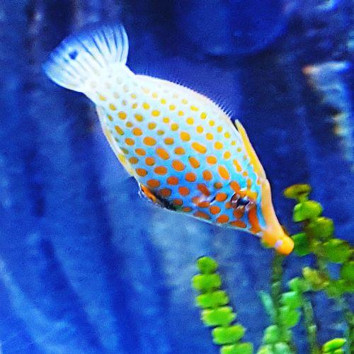 No People Sea Life Underwater Close-up Fish Spotted Fish Spots Aquarium