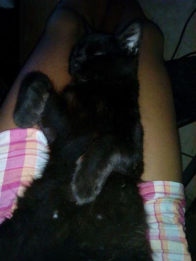 *-* Gato Negro Pumita