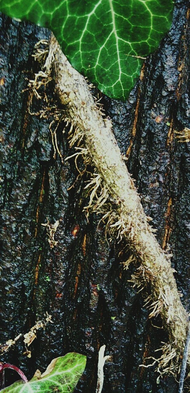 tree trunk, tree, nature, growth, day, outdoors, no people, leaf, close-up, bark, moss, green color, branch, textured, beauty in nature, forest, animal themes