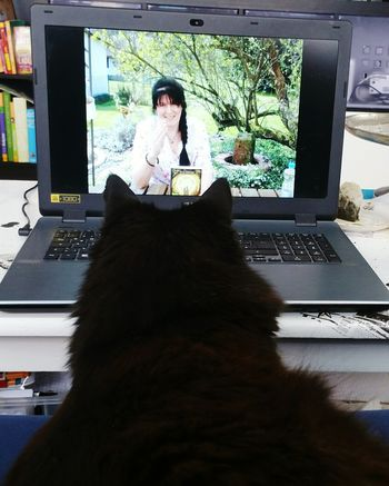 My cat watching his friend on YouTube😁 Indoors  Feline Cats One Animal Pets Domestic Animals Cat Black Cat Toffeethekittycat EyeEm Selects Cat Watching TV