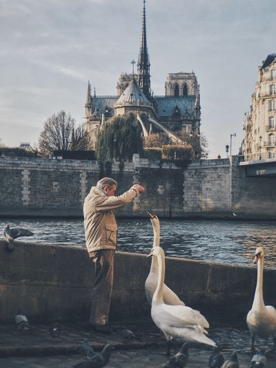 Man feeding geese by the lake