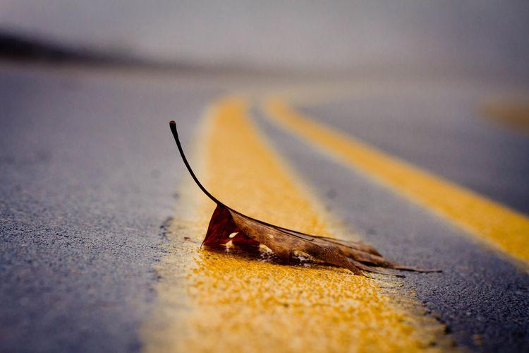 Close-up of dry leaf on street