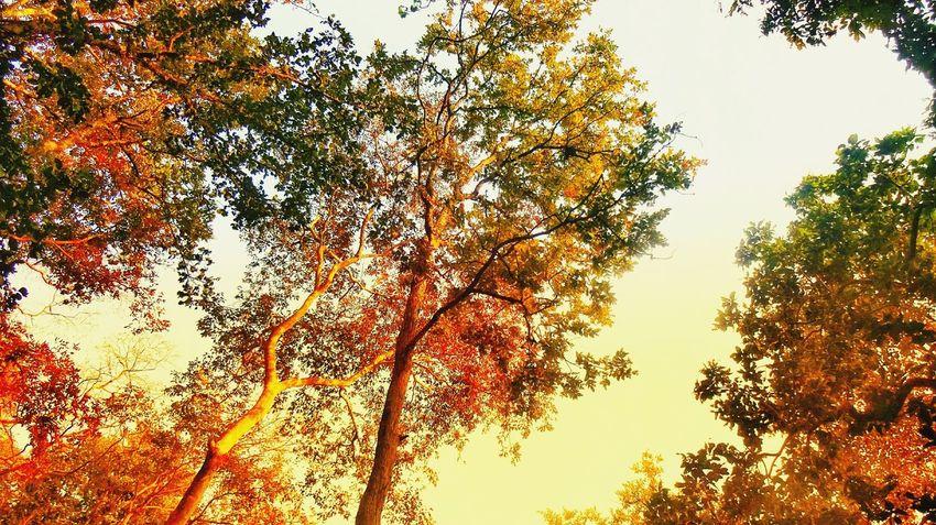 Tree Sunset Branch Backgrounds Sky