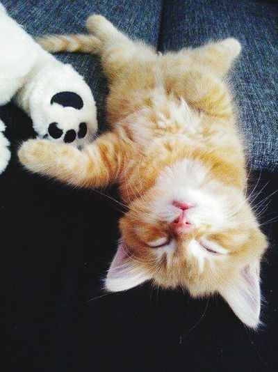 First Eyeem Phototired babycat