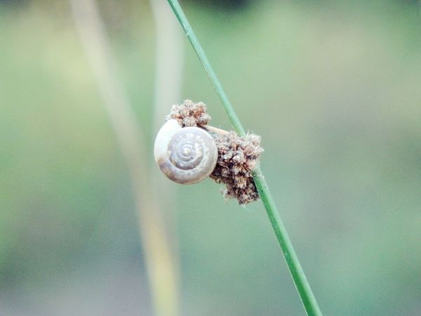 Snail Close-up One Animal Animal Themes Animals In The Wild Day Insect Outdoors No People Animal Wildlife Nature Gastropod Fragility Blue Travel Destinations Nature Tree
