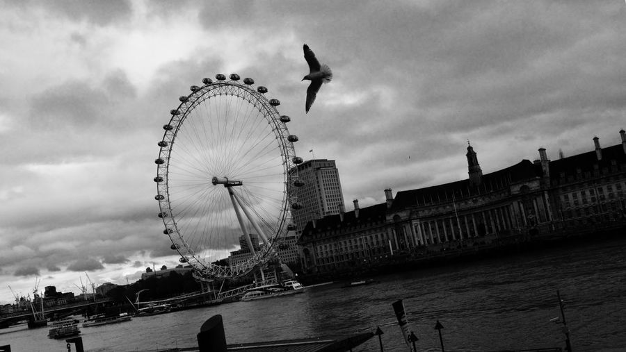 Low Angle View Of Seagull Flying Above Thames River Against Millennium Wheel,
