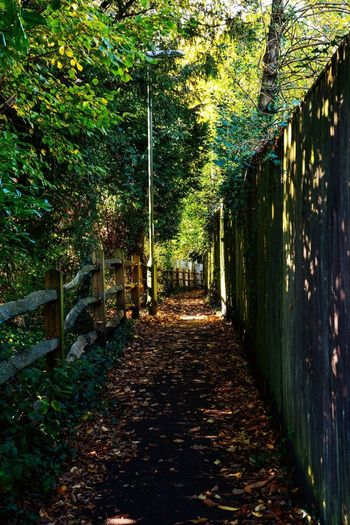 A leafy lane in Henfield, West Sussex ... Plant Tree The Way Forward Direction No People Architecture Nature Day Footpath Growth Green Color Outdoors Built Structure Park Diminishing Perspective Sunlight Park - Man Made Space Plant Part Shadow Leaf