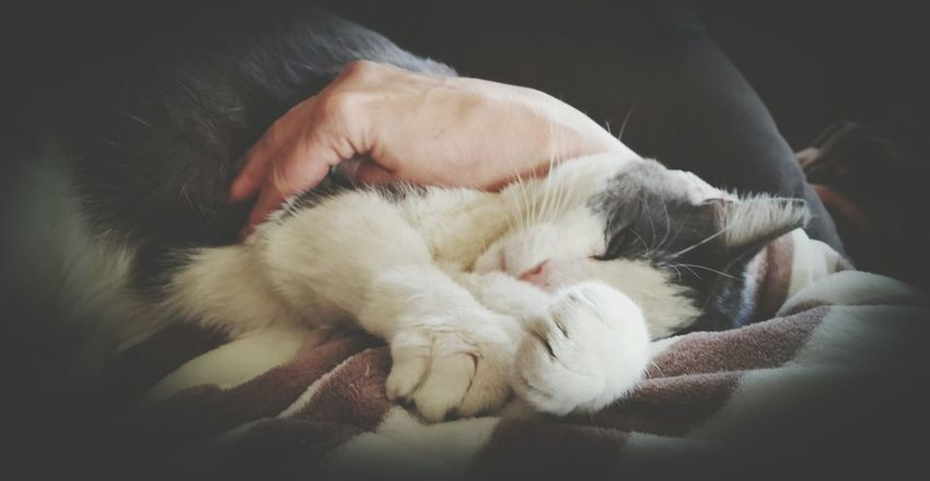 Q Quiet Moments Showcase March Snuggles Cat♡ Cat Lover Cat Nap Lazy Lazy Day Atmospheric Mood This Week On Eye Em Fur Soft Best Buddy Serene Furry Friends Enjoying Life Tranquil Scene Relaxing Moments Relaxed Cat Warm Lap Relaxing Lazy Sunday Furbaby Snugglebuddy