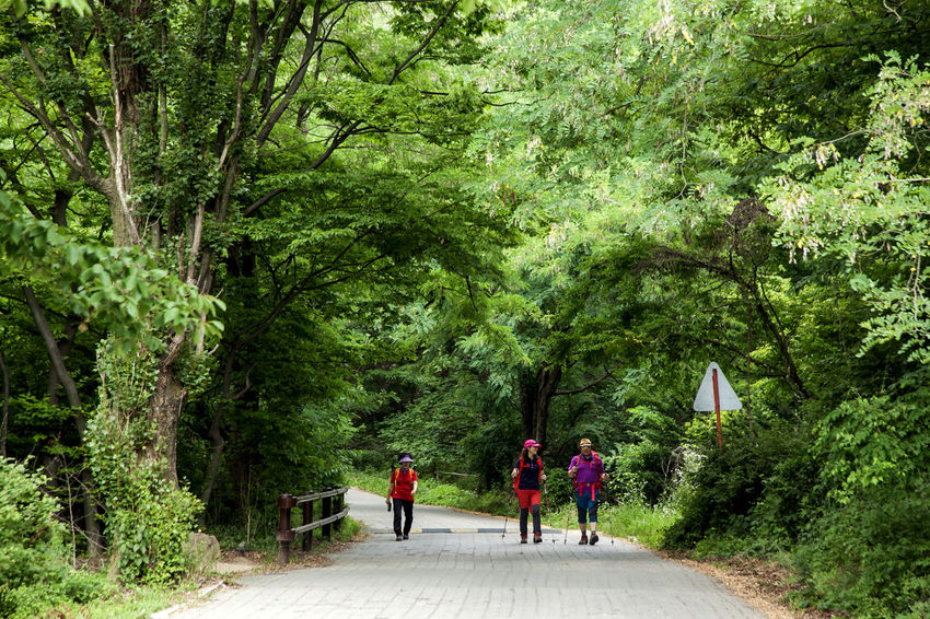 Bukhansan Composition Day Escapism Forest Getting Away From It All Grass Green Green Color Greenery Landscape Leading Lush Foliage Moss Narrow Nature Outdoors Perspective Plant Road Stream The Way Forward Tracking Tree Walking