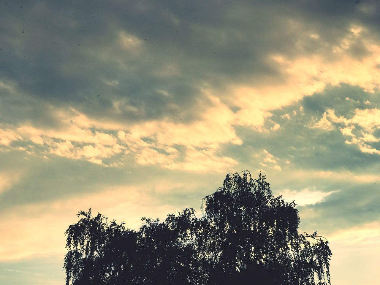 tree, sky, low angle view, nature, beauty in nature, sunset, tranquility, silhouette, scenics, no people, outdoors, cloud - sky, growth, day