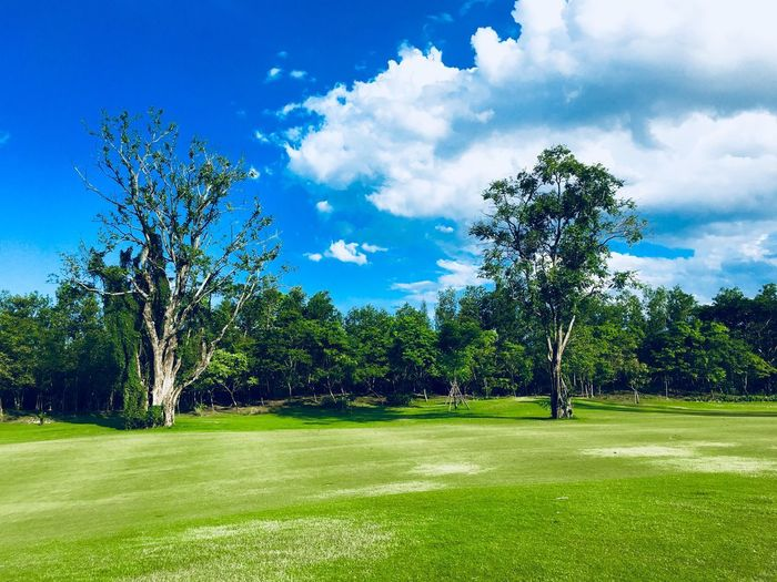 Plant Tree Sky Grass Green Color Cloud - Sky Beauty In Nature Golf Sport Field Land No People Environment Landscape Nature Blue