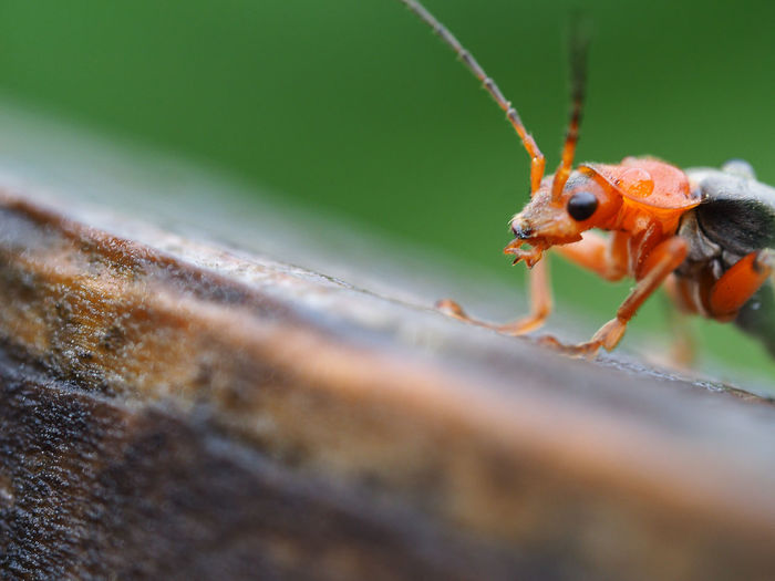 Close-Up Of Insect Outdoors
