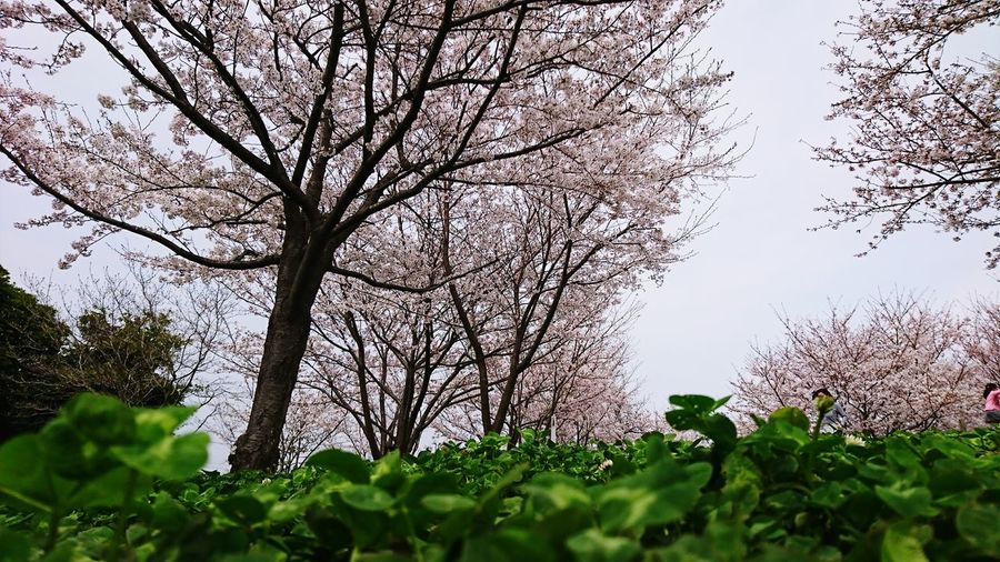Tree Nature Growth Outdoors Low Angle View No People Branch Flower Sky Plant Day Close-up Beauty In Nature Freshness