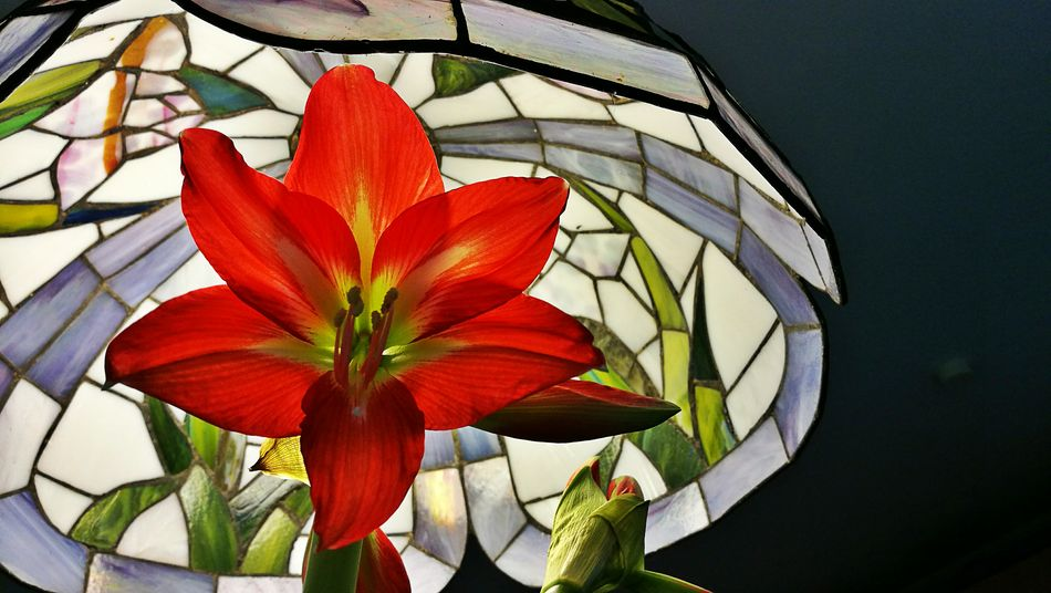 Red Flower Plant Nature Beauty In Nature Leaf Flower Head No People Fragility Outdoors Day Close-up Freshness Tiffany Lamp Pollen Stamen Blossom Pistil Amaryllis Amaryllis In Bloom Petal Art Is Everywhere
