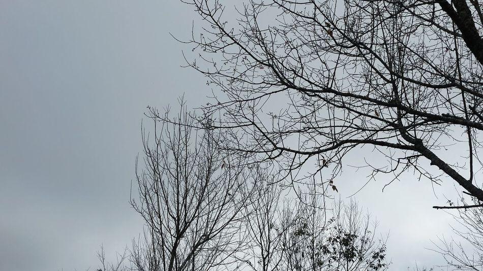 Winter Fine Art Tree ต้นไม้ Nature ภูหินร่องกล้า Phuhin Rongkla หมอก ความว่างเปล่า การเดินทาง