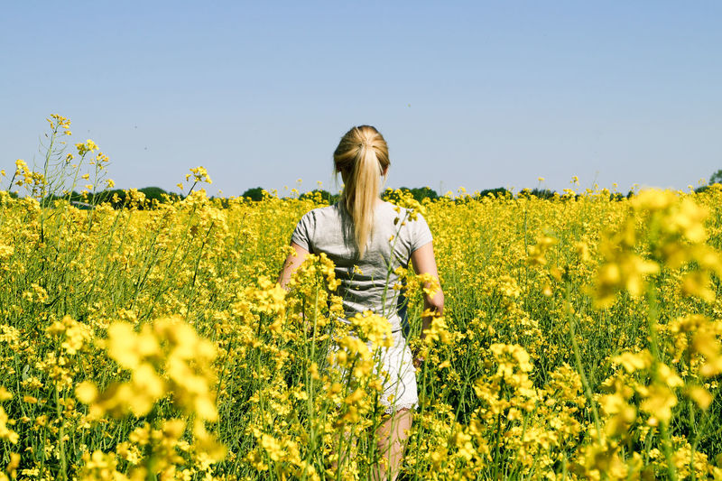 Rear view of woman standing amidst flowering field against clear sky