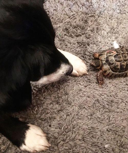 Cute Cute Unusual Friendship Tortoise Animal Themes Animal Mammal Domestic Domestic Animals One Animal Pets Canine Dog Animal Body Part