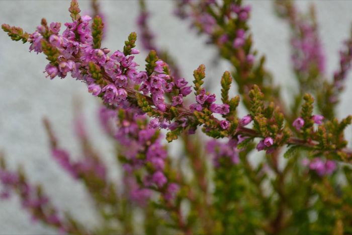 Flowers MyBackGarden Nature On Your Doorstep