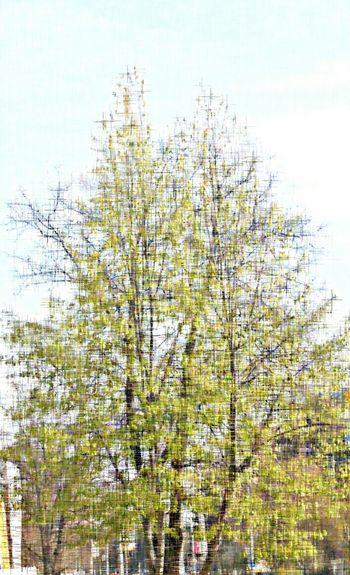 Tree Nature Landscape City Tree