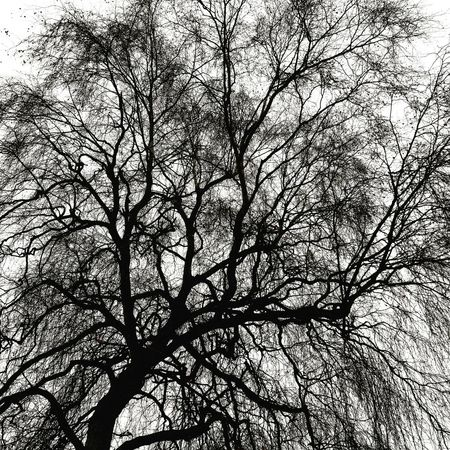 Low Angle View Tree No People Sky Full Frame Nature Backgrounds Growth Day Beauty In Nature Outdoors Branch Black And White Graphic Nature