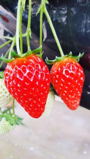 Take Photos Taking Photos Enjoying Life Hello World strawberry