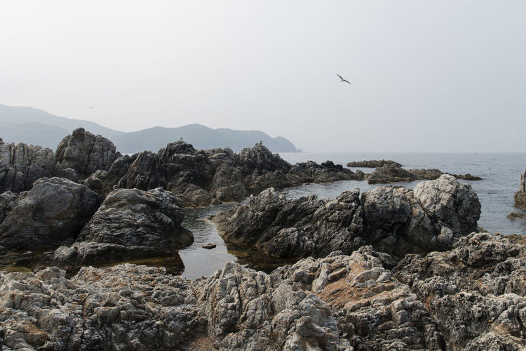 seaside view of Janghohang at Samcheok in Gangwondo, South Korea Animal Themes Animal Wildlife Animals In The Wild Beach Beauty In Nature Bird Clear Sky Day Flying Horizon Over Water Nature No People One Animal Outdoors Rock - Object Scenics Sea Seagull Seaside Sky Tranquil Scene Tranquility Water Waterfront Wildlife